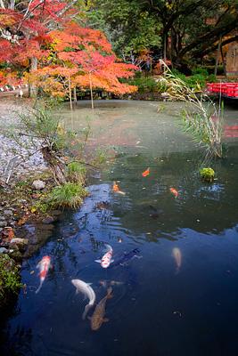 Shin-en Bahçesi