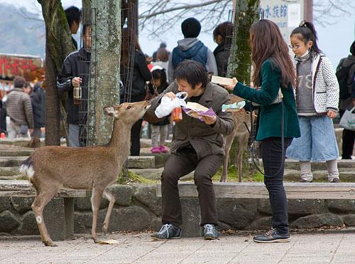 Bu genç çift, yiyeceklerini geyikle paylaşırken geyik kendisine verilenle yetinmeyip yiyeceğin hepsini yemek istiyor.