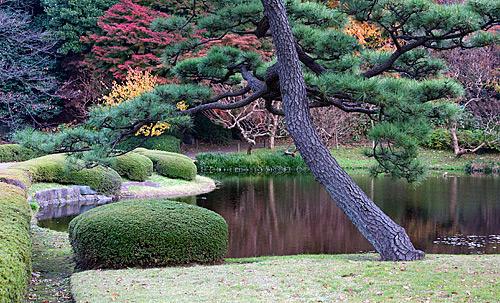 Ninomaru Japon bahçesinden görünümler.