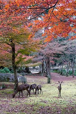 Ormanda otlayan geyikler.