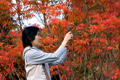 Sonbahar yaprakları ve Japon kadın