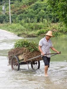 Yerfıstığı hasadını taşıyan köylü.